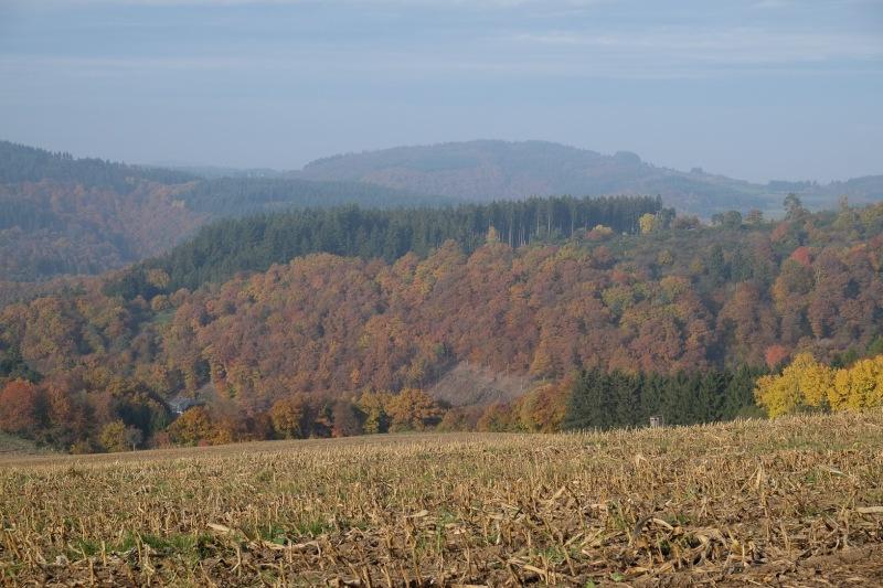 Felder, Bäume, Herbst, Eifel